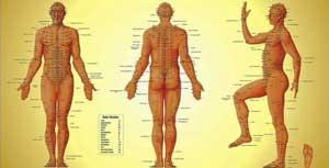 Corso Yoga a Trento - Meridiani Energetici